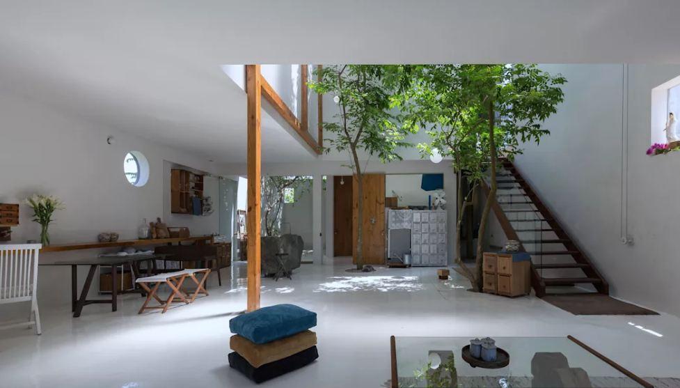 Cây xanh trong nhà tạo cảm giác dễ chịu